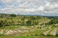 Green rice fields. On Bali island, Jatiluwih near Ubud, Indonesia royalty free stock images