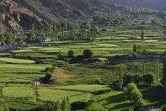 Green rice fields, high poplars and small village houses on the mountainside, Himalayas. Green rice fields, high poplars and small village houses on the Stock Photography