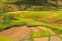 Green Rice fields on hills in central Madagascar Stock Images