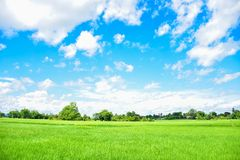 Green rice fields in Thailand. Green rice fields in northern Thailand stock photo