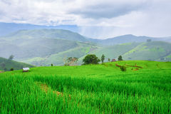 Green Rice fields on terraced Chiangmai ,Thailand Stock Photography