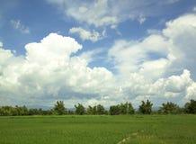 Green rice fields Stock Photos