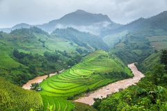Green Rice fields on terraced Royalty Free Stock Photos