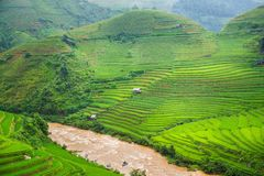 Green Rice fields on terraced Royalty Free Stock Photo
