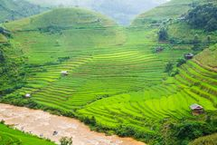 Green Rice fields on terraced Royalty Free Stock Photography