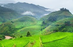 Green Rice fields on terraced Stock Photo
