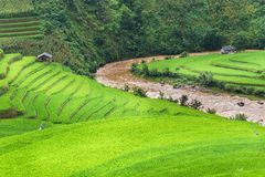 Green Rice fields on terraced Stock Photo