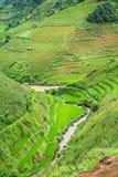Green Rice fields on terraced Stock Photos