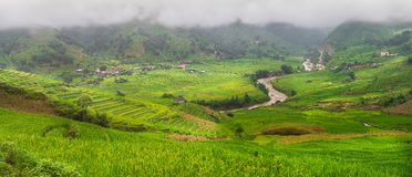 Green Rice fields on terraced Panorama in Mu cang chai, Vietnam Royalty Free Stock Photos