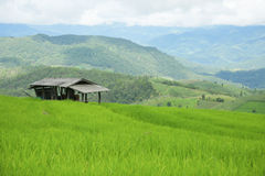 Green Rice fields on terraced in Thailand, rice field or rice terraces in the mountain and travel place for relax and feeling nice Royalty Free Stock Images