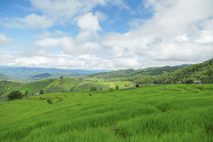 Green Rice fields on terraced in Thailand, rice field or rice terraces in the mountain and travel place for relax and feeling nice Royalty Free Stock Photos
