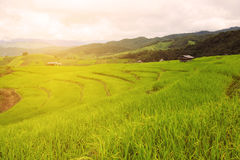 Green Rice fields on terraced in Thailand, rice field or rice terraces in the mountain and travel place for relax and feeling nice Royalty Free Stock Photo