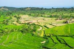 Green rice fields terraces Stock Photo