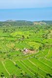 Green rice fields terraces Stock Photos
