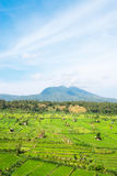 Green rice fields terraces and volcano Stock Images