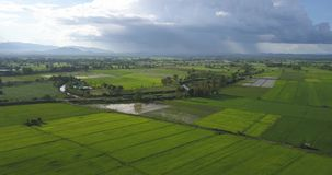 Aerial shot Asia rice field beautiful rainy sky and green rice fields stock video footage