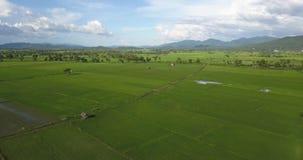 Beautiful rainy sky and green rice fields stock footage