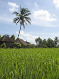 green rice fields villa bali Royalty Free Stock Images