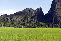 Green rice paddy field and limestone mountains in Vang Vieng, popular tourist resort town in Lao PDR Royalty Free Stock Photos