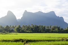 Green rice paddy field and limestone mountains in Vang Vieng, popular tourist resort town in Lao PDR Royalty Free Stock Photo