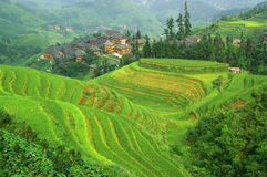 Green rice terrace in china mountaines Royalty Free Stock Images