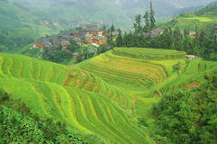 Green rice terrace in china mountains Stock Images