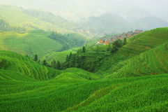 Green rice terrace in china mountains Royalty Free Stock Photo