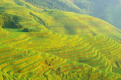 Green rice terrace in china mountains royalty free stock photography