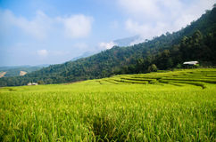 Green rice terrace. S and misty mountain Royalty Free Stock Images