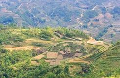Green rice terraced Stock Photos