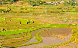 Green rice terraced fields Royalty Free Stock Photos