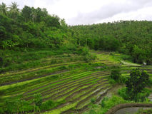 The green rice terraces Stock Photo