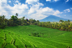 Green rice terraces landscape on mountain background Stock Images