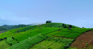 Green Rice Terraces. The rice terraces in rainy season. GREEN RICE FIELD AT MAE JAM stock images