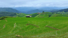 Green Rice Terraces. The rice terraces in rainy season. GREEN RICE FIELD AT MAE JAM Stock Image