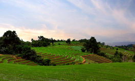 Green Rice Terraces. The rice terraces in rainy season. GREEN RICE FIELD AT MAE JAM Stock Photography