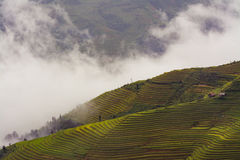 Green Rice Terraces Under Foggy Sky during Daytime Royalty Free Stock Image