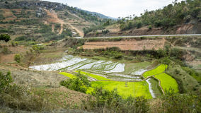 Green rice terraces on a valley in a Madagascar landscape Stock Photos
