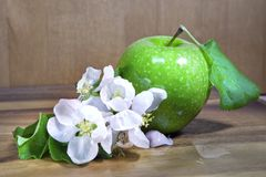 Green ripe apple and white apple tree flowers on wooden background.  Royalty Free Stock Photos