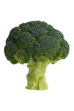 Green ripe broccoli Royalty Free Stock Photos