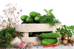 Green ripe Cucumbers Stock Images