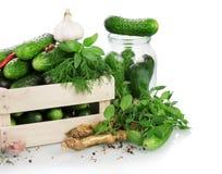 Green ripe Cucumbers Stock Image