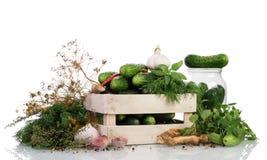 Green ripe Cucumbers Royalty Free Stock Photo