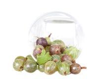 Green ripe gooseberries Stock Images
