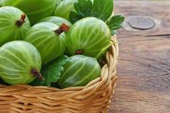 Green ripe gooseberries large Stock Photo
