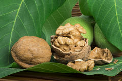 Green and ripe walnuts. Studio shot Royalty Free Stock Photo