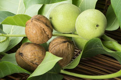 Green and ripe walnuts. Studio shot Stock Photography