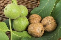 Green and ripe walnuts. Studio shot Royalty Free Stock Photo