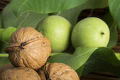 Green and ripe walnuts. Studio shot Stock Photography