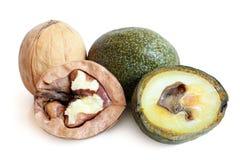 Green and ripe walnuts Stock Image